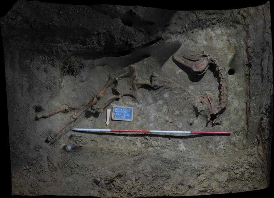 Archeologen vinden skelet van paard op de Paardenmarkt
